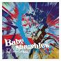 Album Fall from Grace de Babyshambles