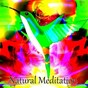 Album Natural meditation de Tranquil Music Sound of Nature / Healing Yoga Meditation Music Consort / Guided Meditation