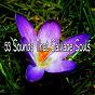 Album 53 sounds that salvage souls de Massage