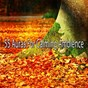 Album 55 auras for calming ambience de Relaxing Meditation Songs Divine