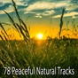 Album 78 peaceful natural tracks de Brain Study Music Guys