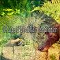Album 60 liquid mind rain meditation de Baby Nap Time