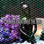 Album 77 Tracks Encourage the Mind de Japanese Relaxation & Meditation