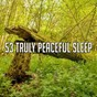 Album 53 truly peaceful sleep de Baby Sleep