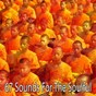 Compilation 67 Sounds for the Soulful avec Sound Library XL