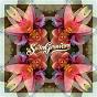 Album Butterfly de Swingrowers